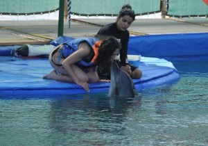 Plywaj z delfinami, Marmaris